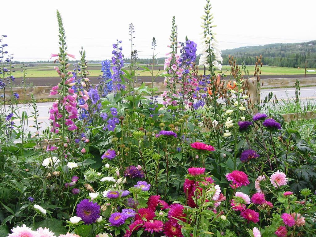 Summer Flowers In Season